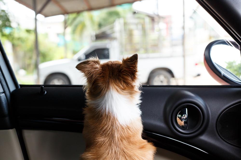 乳幼児の車内放置が絶対厳禁なのはもちろんだが、ペットも危ない! ご注意を!!
