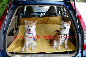 犬とラゲッジ のコピー