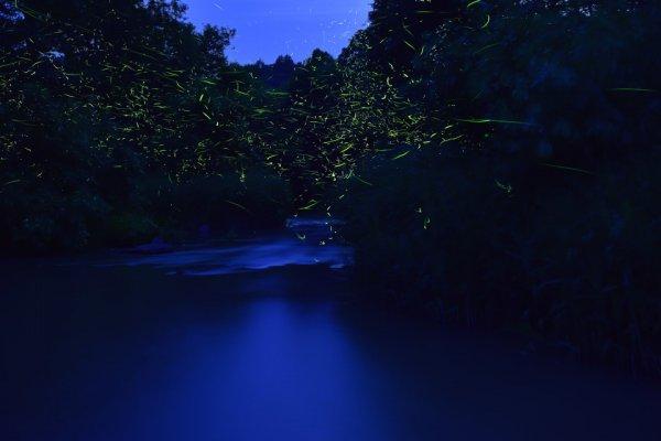 【北海道発 光の絶景】この季節にだけ出現するホタルの町の幻想の夜