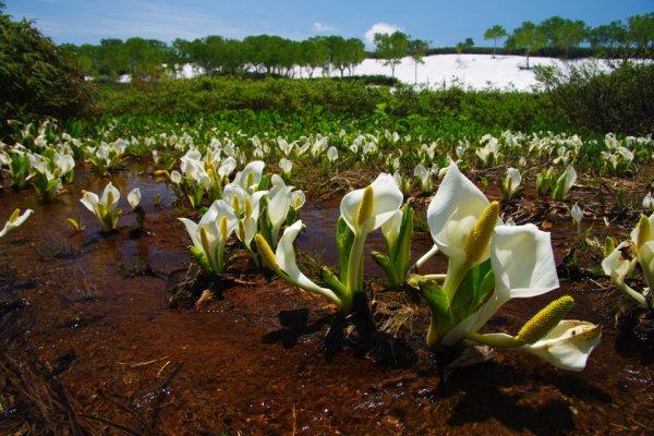 無数に点在する沼と美しい花々の競演! 北海道雨竜沼湿原の絶景