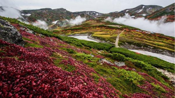 日本一早い紅葉! 大雪山黒岳は今、鮮やかな紅に染まっています