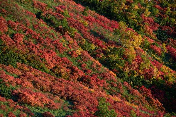 これはすごい! 赤、黄、緑、青、白がハーモニーを奏でる大雪山赤岳の紅葉