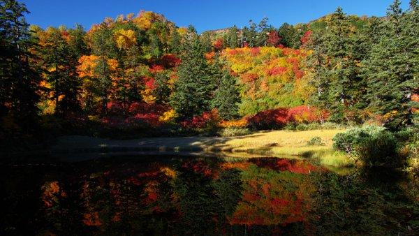 まるで色彩のカーニバル! ヒグマ密集地帯に広がる日本一の紅葉
