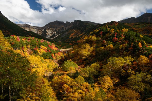 荒々しく雄大な活火山と紅葉のコラボレーション! 今が見頃の十勝岳の絶景